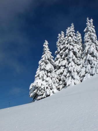 gstaad: Snow covered trees, cold winter day Stock Photo