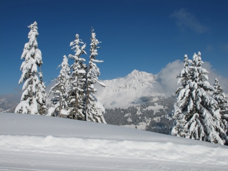 canton berne: Snow covered spruces and mountains near Gstaad Stock Photo