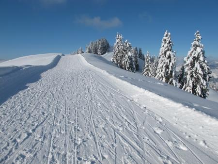 sledging: Slitta percorso e la neve coperto abeti rossi