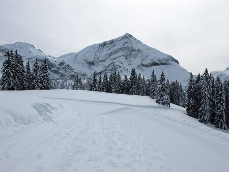 Mountain named Spitzhorn and forest in the winter