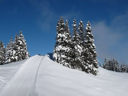 saanenland: Snow covered spruces and sledging path
