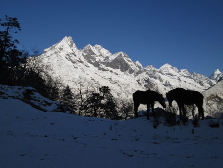 Silhouettes of two horse in front of a mountain, view from Tengboche photo