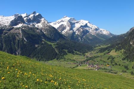 snow capped: Monta�as cubiertas de nieve y verde prado lleno de flores silvestres amarillas
