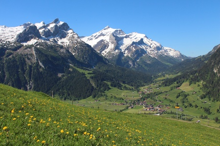 Snow capped mountains and green meadow full of yellow wildflowers photo