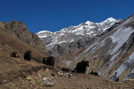 Scene on the way to Thorung La Pass, Nepal photo