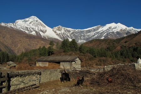 Idyllic village Titi, Dhaulagiri and Tukuche Peak, high mountains in Nepal photo