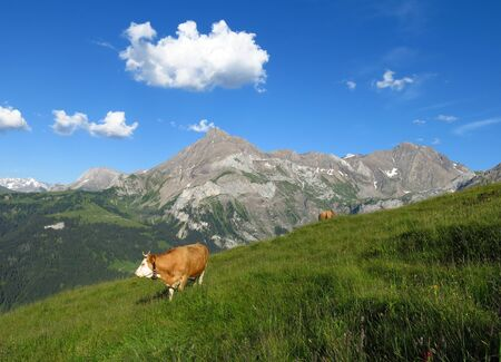 Summer scene in the Swiss Alps photo
