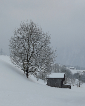 Tree and shed on a winter day photo