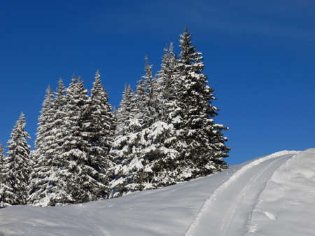 slope: Firs and ski slope Stock Photo
