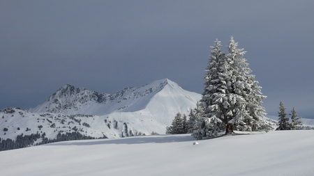 canton berne: Fir and mountains in winter, scene near Gstaad