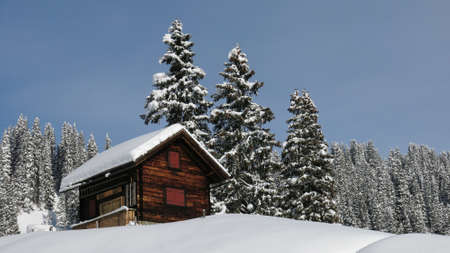 firs: Little chalet and firs