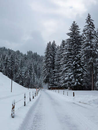 saanenland: Snow covered road and forest