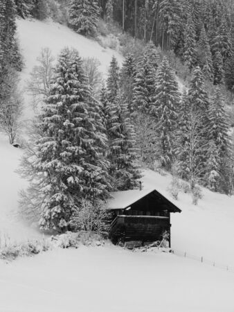 saanenland: Old timber chalet and snow covered trees