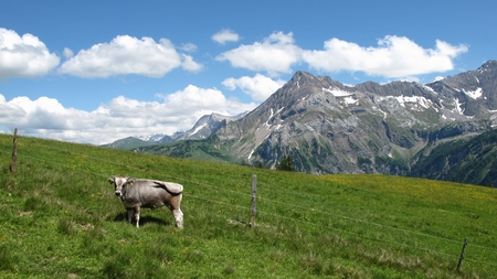 Summer in the Swiss Alps photo