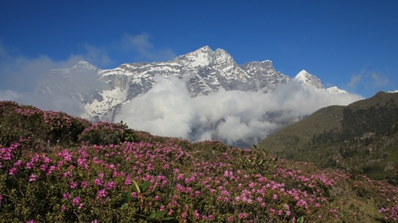 Pink spring flowers and snow capped Kongde Ri
