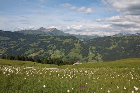 saanenland: Green summer landscape in the Bernese Oberland