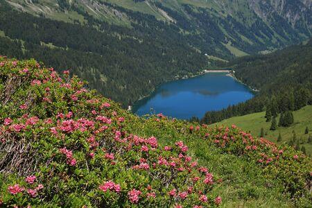 canton berne: Alpenrosen and lake Arnensee
