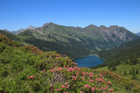 gstaad: Alpenrosen and lake Arnensee