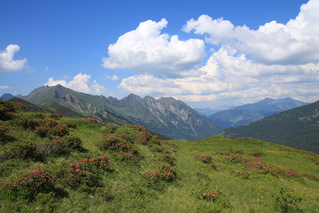 canton berne: Green summer landscape in the Bernese Oberland