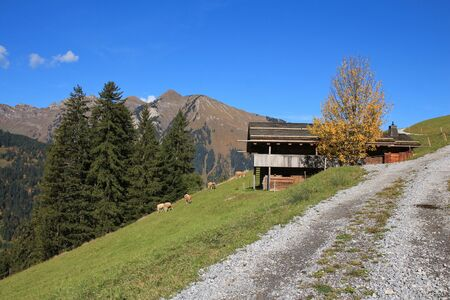saanenland: Rural autumn scene near Gstaad