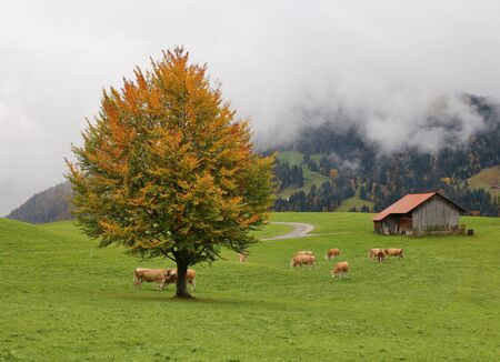 saanenland: Idyllic autumn scene in Gstaad, Swiss Alps