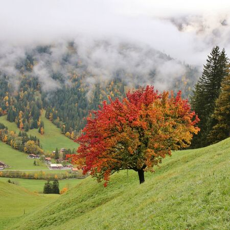 saanenland: Autumn day in the Swiss Alps Stock Photo
