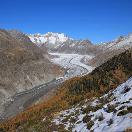 aletsch: Aletsch Glacier and golden larch trees Stock Photo