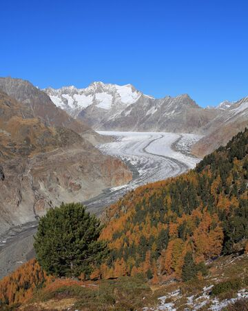 aletsch: Colorful autumn forest and Aletsch Glacier
