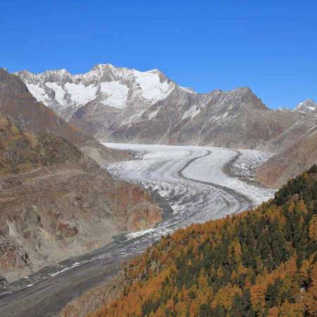 aletsch: Curved Aletsch Glacier and golden larch forest Stock Photo
