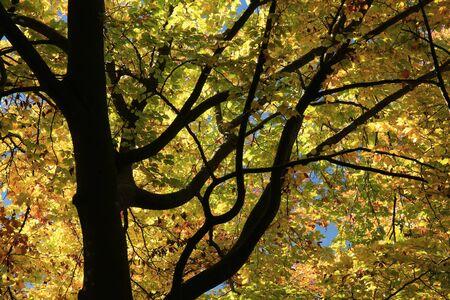 albero della vita: Dettaglio di cima di un albero in autunno Archivio Fotografico