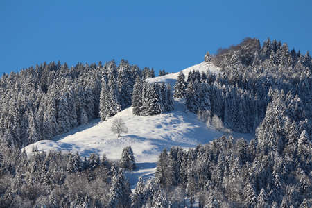 toggenburg: Pine forest in Winter Stock Photo