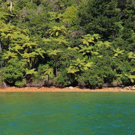 tropical native fern: Native bush in New Zealand