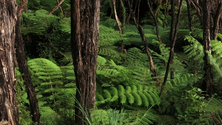 aotearoa: Vegetation in the Abel Tasman National Park.