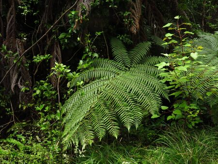 typical: Typical vegetation in New Zealand.