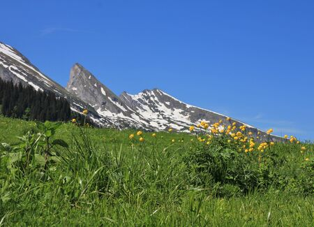 toggenburg: Spring scene in the Toggenburg valley, Swiss Alps. Buttercups and peak of the Churfirsten Range.
