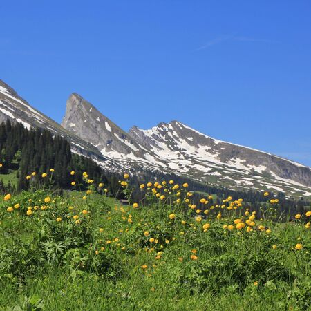 toggenburg: Spring scene in the Swiss Alps