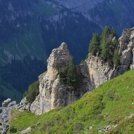 steep cliffs: Scene on Mt Niederhorn, Bernese Oberland. Trees on top of steep cliffs. Stock Photo
