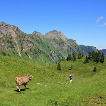 glarus: Scene on the hiking route from lake Obersee to lake Klontalersee. Cow on a green mountain meadow looking at a comming hiker. Mt Brunnelistock. Summer scene in the Swiss Alps. Stock Photo