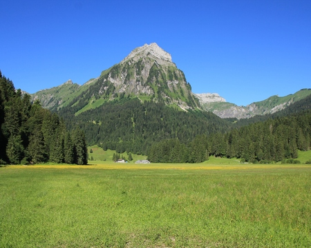 glarus: Summer scene in Glarus Canton, Swiss Alps. Mt Brunnelistock, fir forest and green meadow. Nature background.