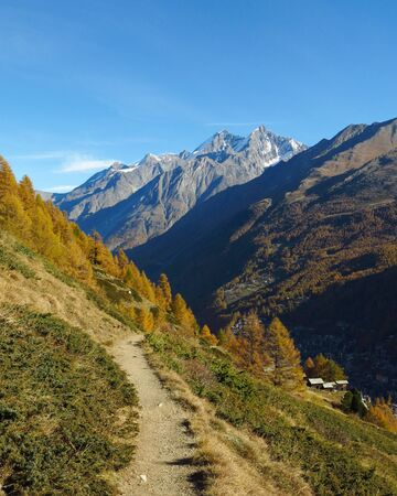 and hiking path: Golden larch forest in Zermatt. Hiking path and high mountains. Autumn scene. Stock Photo