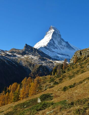 snow capped: Autumn landscape in Zermatt. Snow capped Matterhorn. Golden larch trees.
