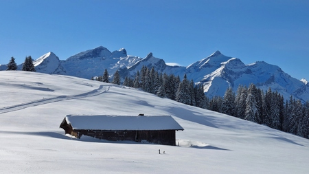 saanenland: View from Mt Wispile, Swiss Alps. Mt Oldenhorn. Winter scene near Gstaad.