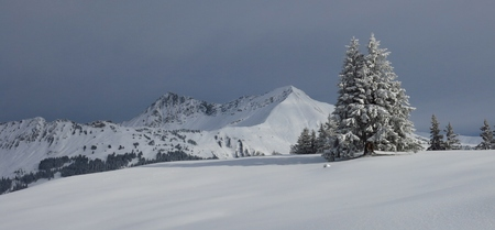 gstaad: Winter landscape in Gstaad, Swiss Alps. Snow covered fir. Mountains Mt Lauenenhorn and Mt Gifer. Stock Photo