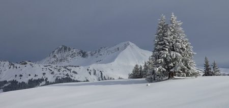 saanenland: Winter scene in Gstaad, Swiss Alps. Snow covered fir and mountains. Mt Gifer and Mt Lauenenhorn.