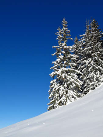 gstaad: Snow covered firs in Gstaad. Nature background. Stock Photo