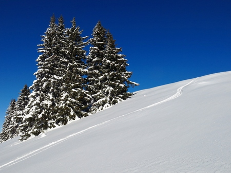 Wintery firs in Gstaad. Stock Photo