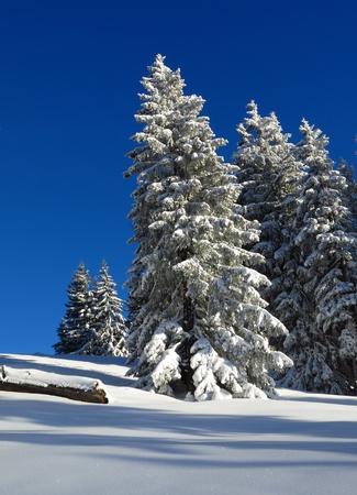 Winter scene in Gstaad, Switzerland. Snow covered trees.