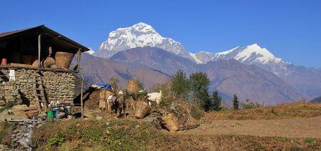 Rural scene on the way from Tatopani to Gorepani, Nepal. Dhaulagiri range.