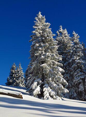 Wintry scene in the Swiss Alps. Stock Photo