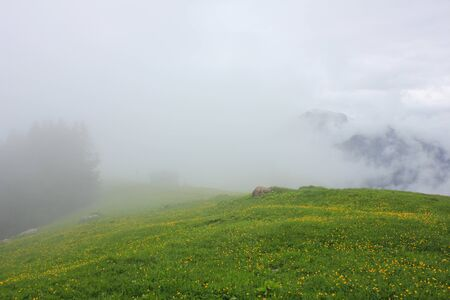 Green Meadow with yellow flowers. 免版税图像